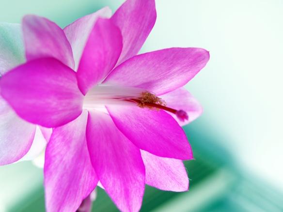 Flor de Maio - Foto Kika Domingues
