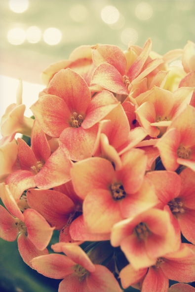 Flores na Janela - Kika Domingues