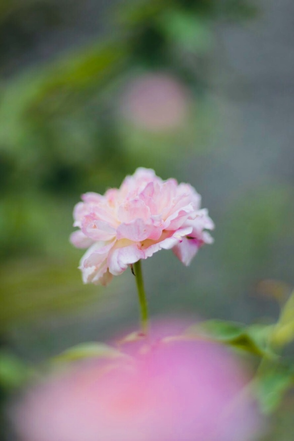 By Kika Domingues - meu jardim